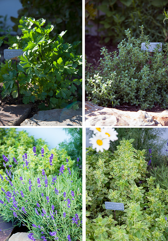 Farmhouse Herb Garden