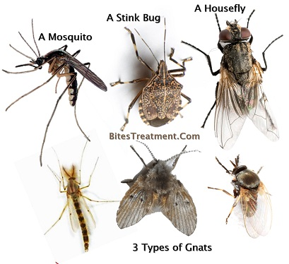 Gnats Vs Mosquitoes vs a Housefly and a Stinkbug