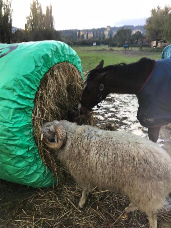 Big bale buddy from Bitless Equestrian, used on its side
