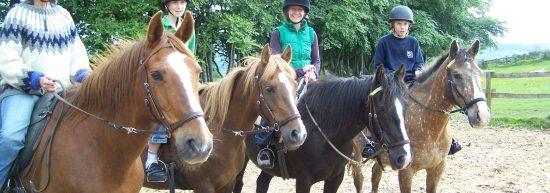 bitless natural equestrian centre