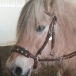 fleece noseband for bitless bridle