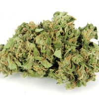 buy kushberry online