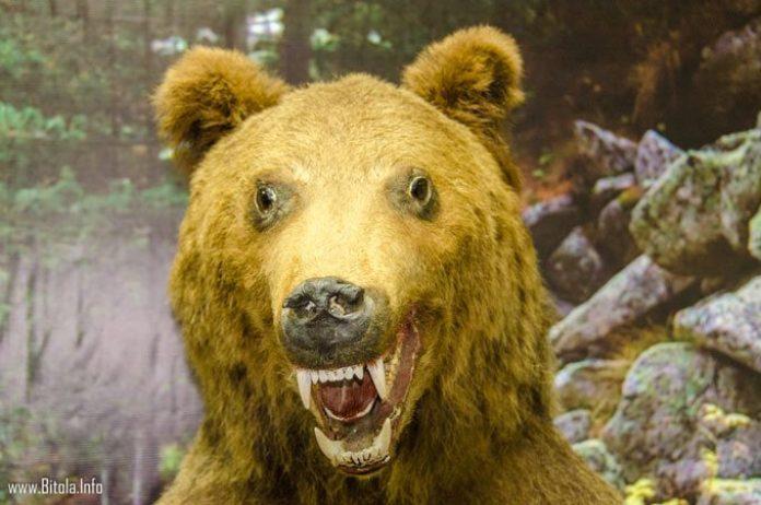Bear preparated - pelister info center