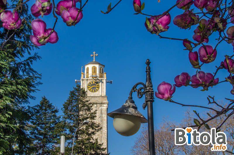 Read more about the article Магнолии во центарот на Битола