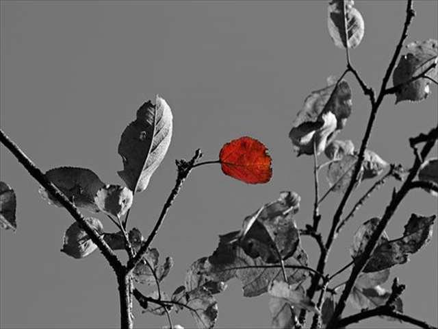 モノクロと紅い葉っぱ