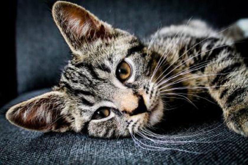 なぜ懐かない猫