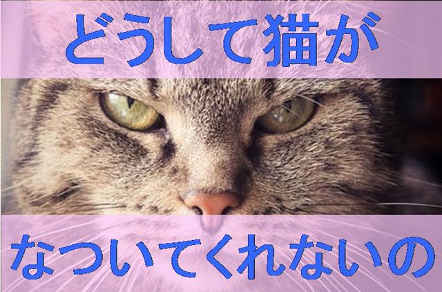 どうして猫がなついてくれない