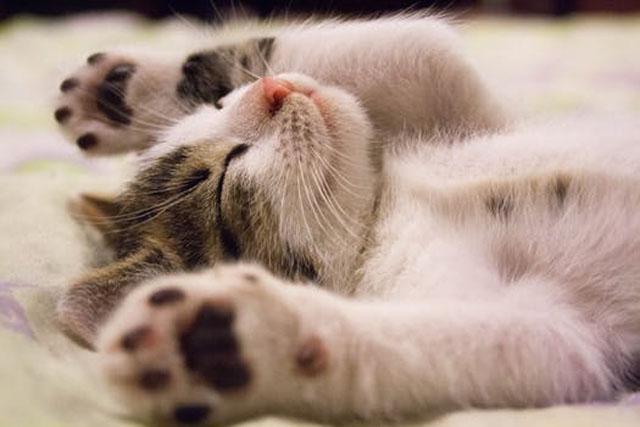 猫はよく眠る