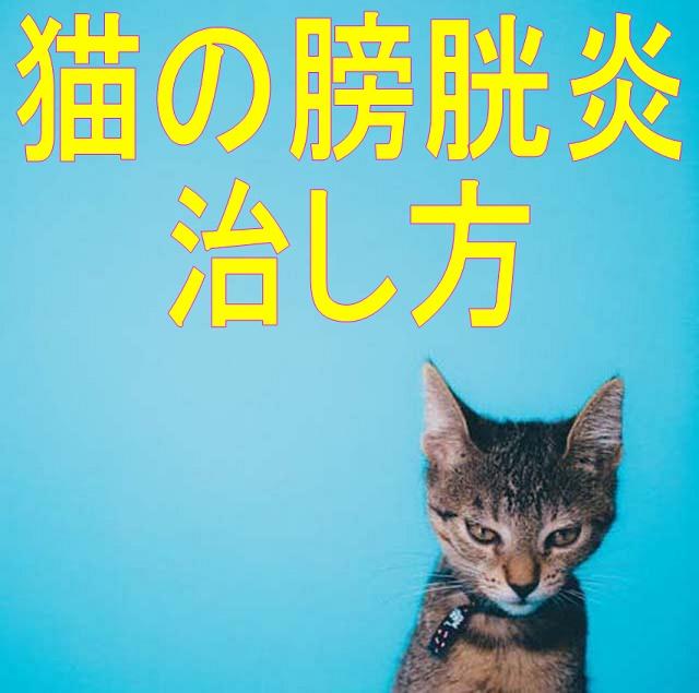 猫膀胱炎治し方