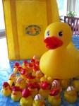 The Great Duck Race is coming on 6/22/13