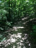 The forested trail meanders next to the river.