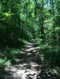 A very green trail!