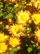 Flowers in Hamilton Gardens