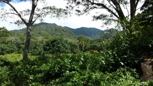 view of mountain through trees and vegetation.