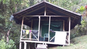 wooden lodge in jungle