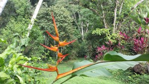 orange bird of paradise flower
