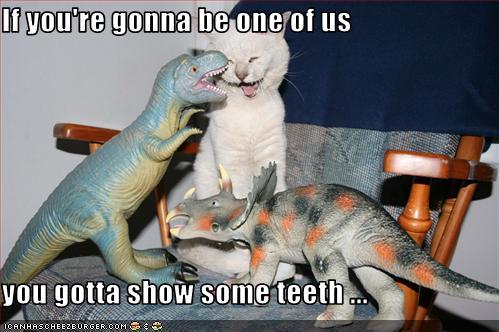 Kitten-will-be-dinosaur