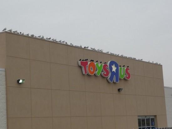 Segregation of birds