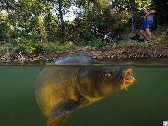 Carp-fishing-001