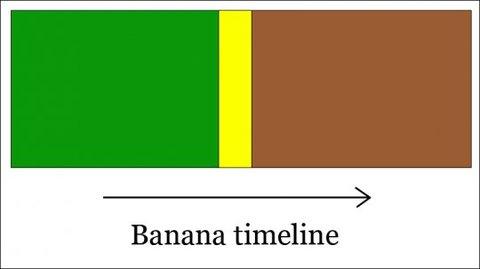 Banana timeline