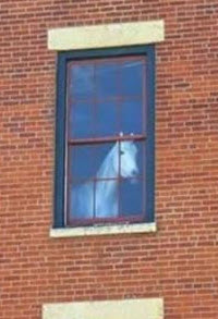 Horsey in the window