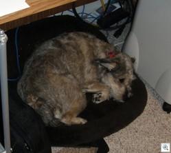 Trixie sleep2