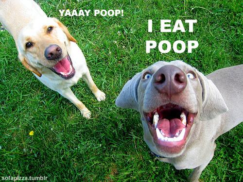 Yay poop