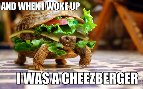 I was a cheezeburger