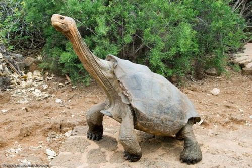 Turtle giraffe child