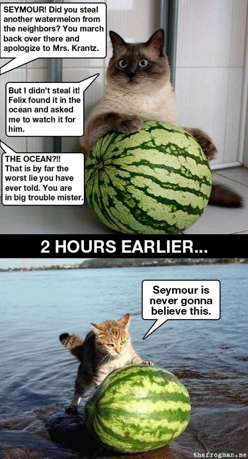 Ocean melon