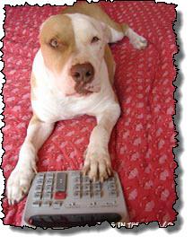 Calculator_dog