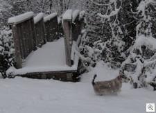 Xmas snow6