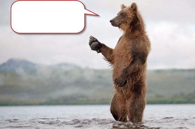 Bear caption2