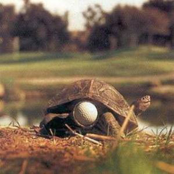 Turtle-golf2