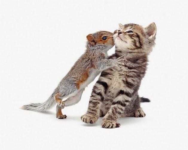 Kitten squirrel