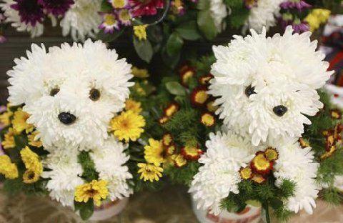 Puppy bouquet1