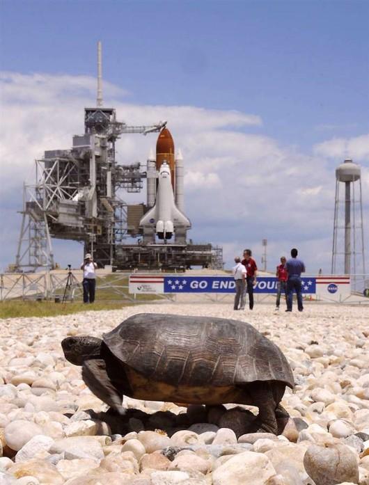 Turtle shuttle