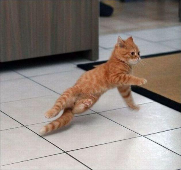 Slick kitty dance moves