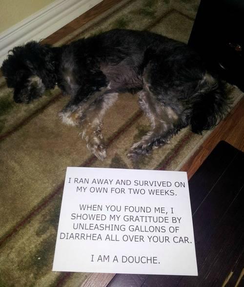 Dog douche