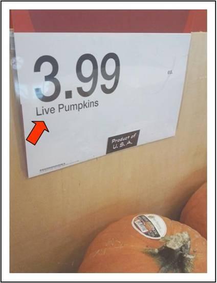 Live pumpkins