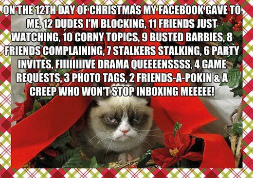 12 days of xmas cat