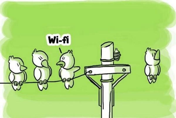 Wi-fi bird