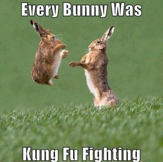 Every bunny was