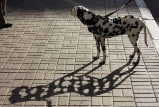 Walking the spotted dog