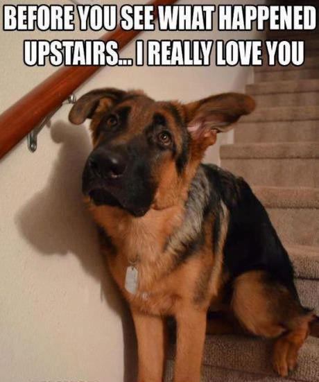 Before you see what happened upstairs