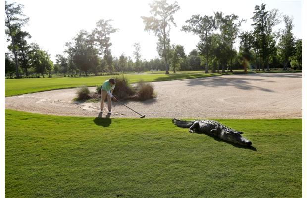 Golf hazard