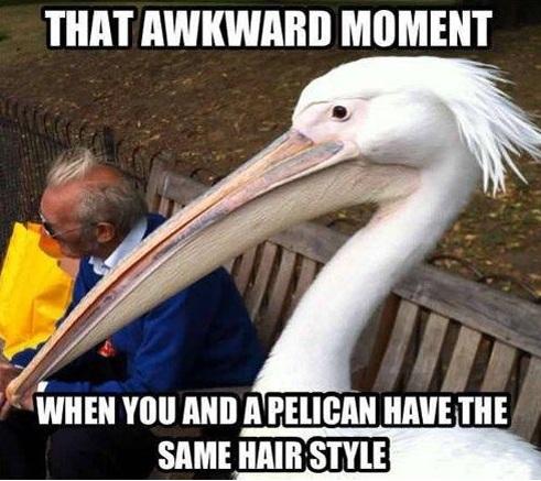 Pelican hair