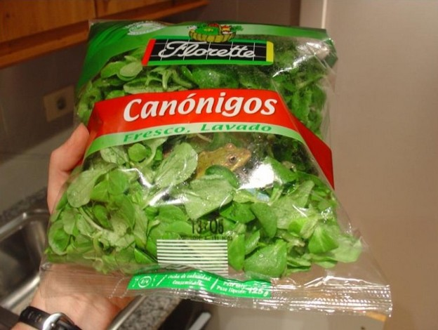 Fresh_salad