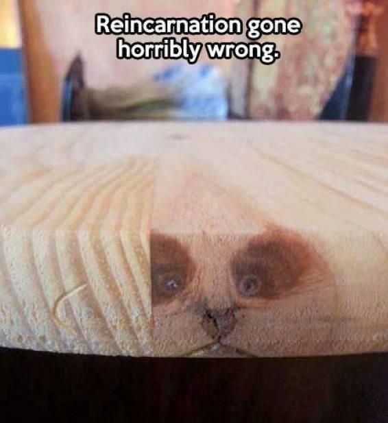 Reincarnation Fail