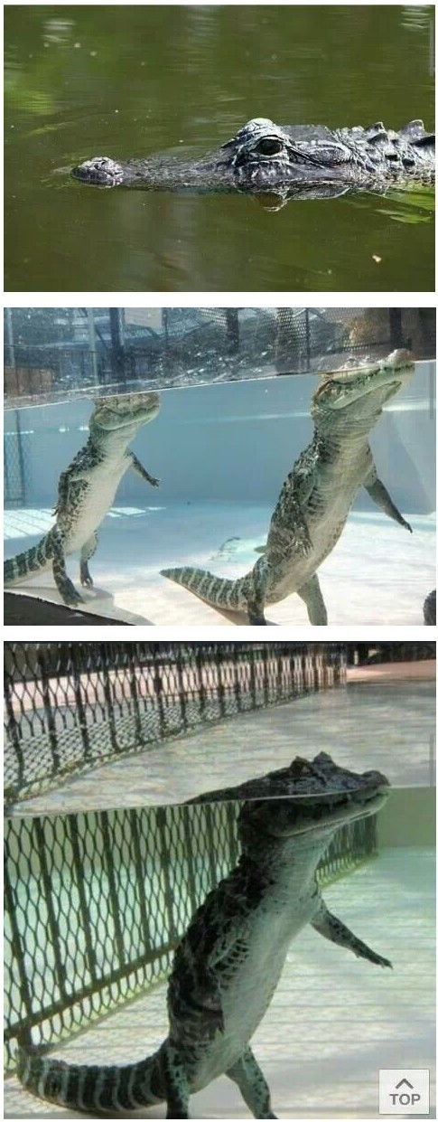 I thought they swam